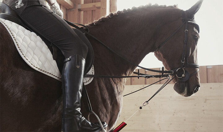Veterinary rehabilitation technology and equestrian sports – significant inventions